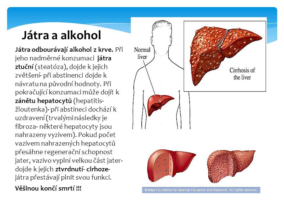Játra odbourávají alkohol z krve. Při jeho nadměrné konzumaci játra ztuční (steatóza), dojde k jejich zvětšení- při abstinenci dojde k návratu na půvo