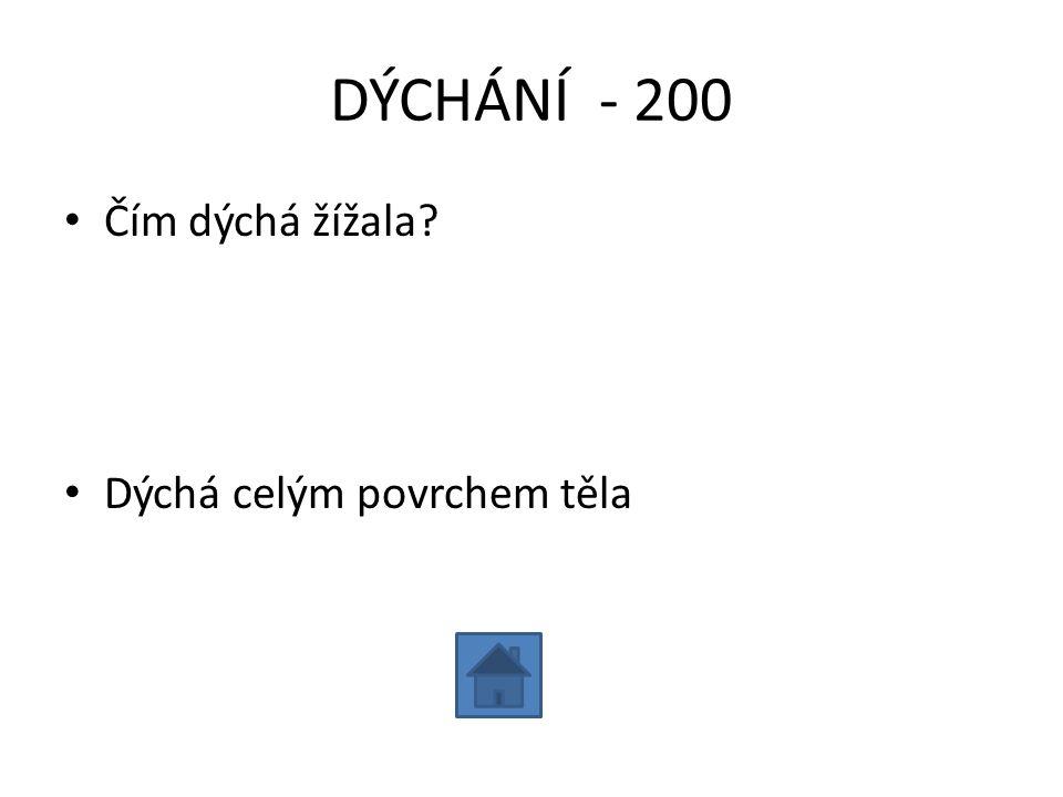 DÝCHÁNÍ - 300 • Jmenuj 3 živočichy, kteří dýchají žábrami: • Např. ryby