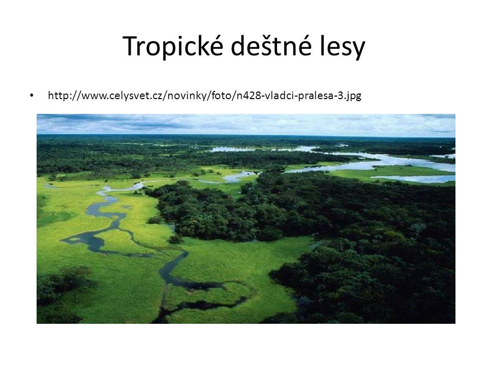Tropické deštné lesy • http://www.celysvet.cz/novinky/foto/n428-vladci-pralesa-3.jpg