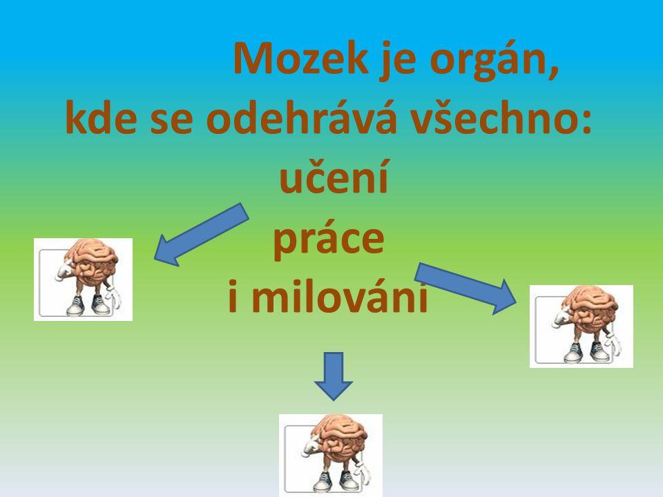 Vývoj mozku v kostce
