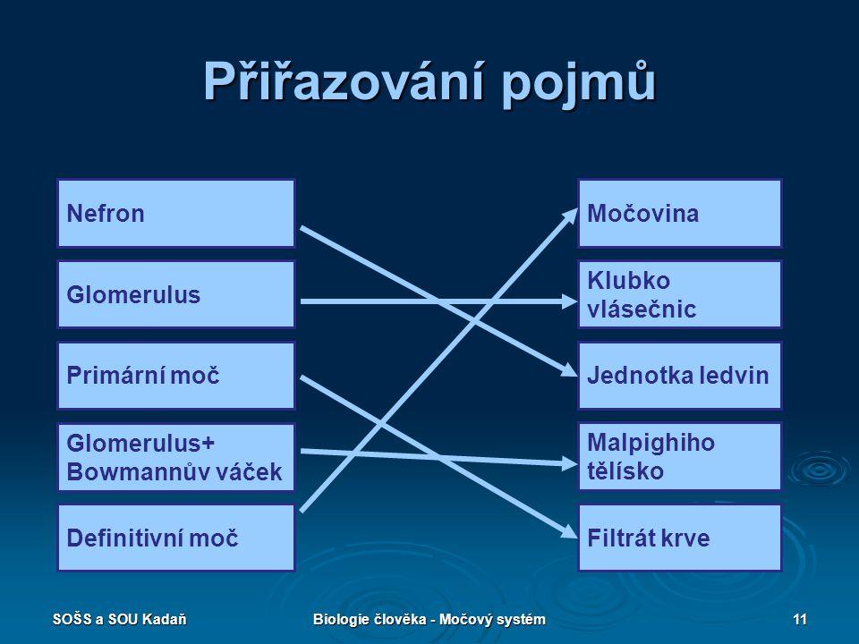 SOŠS a SOU KadaňBiologie člověka - Močový systém11 Přiřazování pojmů Nefron Glomerulus Primární moč Glomerulus+ Bowmannův váček Definitivní moč Močovi