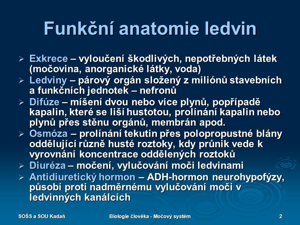 SOŠS a SOU KadaňBiologie člověka - Močový systém2 Funkční anatomie ledvin  Exkrece – vyloučení škodlivých, nepotřebných látek (močovina, anorganické