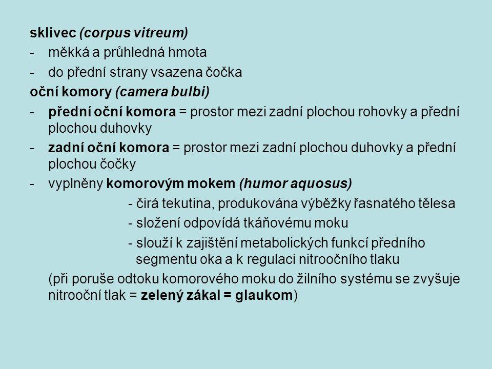 sklivec (corpus vitreum) -měkká a průhledná hmota -do přední strany vsazena čočka oční komory (camera bulbi) -přední oční komora = prostor mezi zadní plochou rohovky a přední plochou duhovky -zadní oční komora = prostor mezi zadní plochou duhovky a přední plochou čočky -vyplněny komorovým mokem (humor aquosus) - čirá tekutina, produkována výběžky řasnatého tělesa - složení odpovídá tkáňovému moku - slouží k zajištění metabolických funkcí předního segmentu oka a k regulaci nitroočního tlaku (při poruše odtoku komorového moku do žilního systému se zvyšuje nitrooční tlak = zelený zákal = glaukom)
