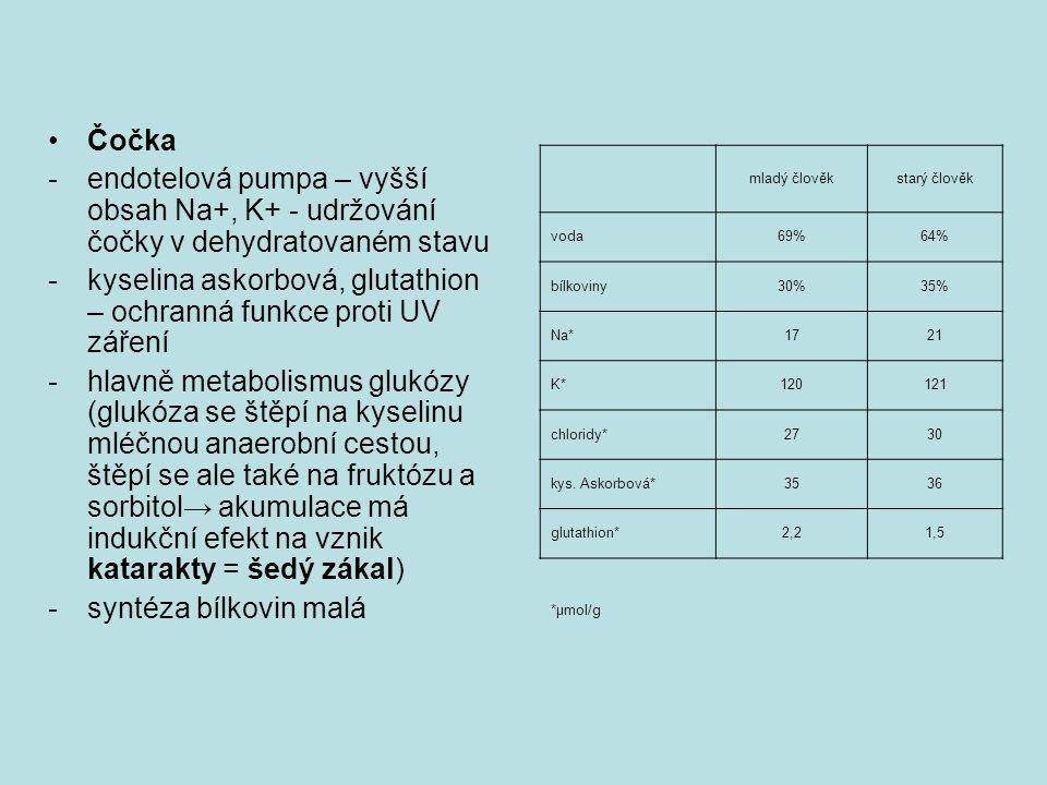 •Čočka -endotelová pumpa – vyšší obsah Na+, K+ - udržování čočky v dehydratovaném stavu -kyselina askorbová, glutathion – ochranná funkce proti UV záření -hlavně metabolismus glukózy (glukóza se štěpí na kyselinu mléčnou anaerobní cestou, štěpí se ale také na fruktózu a sorbitol→ akumulace má indukční efekt na vznik katarakty = šedý zákal) -syntéza bílkovin malá mladý člověkstarý člověk voda69%64% bílkoviny30%35% Na*1721 K*120121 chloridy*2730 kys.