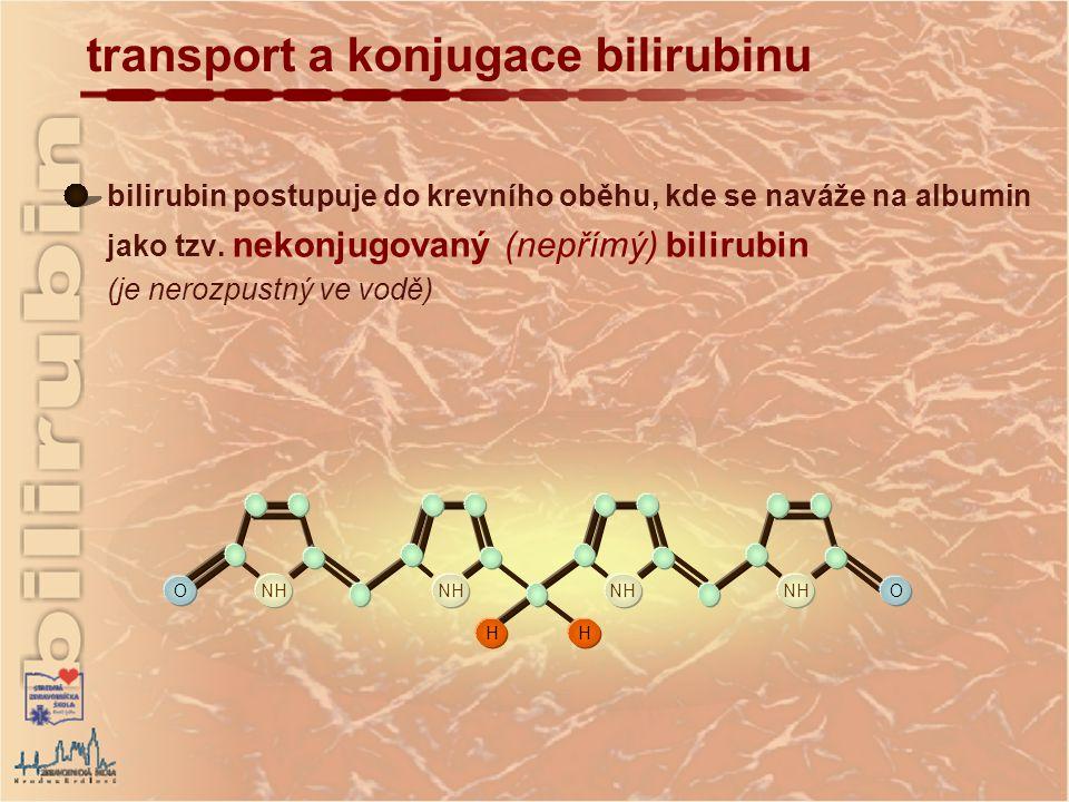 transport a konjugace bilirubinu O NH O HH HO OH O COO - O CH 2 CO CH 2 CO CH 2 HO OH O COO - O konjungovaný bilirubin je hlavní forma Bi vylučovaná do žluči za fyziologických podmínek je transportovaný do jater, kde se působením glukuronyltransferázy konjuguje s kyselinou glukuronovou za vzniku konjugovaného (přímého) Bi (je rozpustný ve vodě) 2 molekuly kyseliny glukuronové