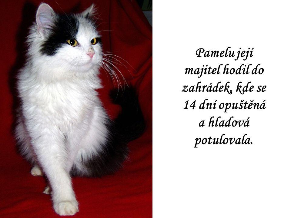 Bílomourek Žako se narodil opuštěné kočce ve sklepě rodinného domu v Hulíně.
