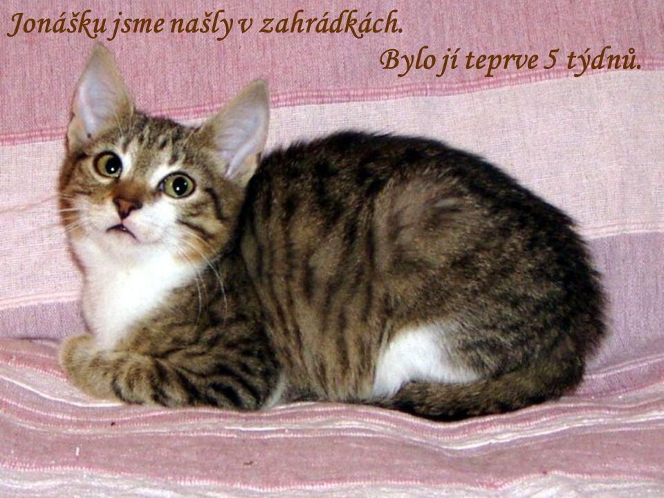 Z Luhačovic pochází i Puk. Pamelu její majitel hodil do zahrádek, kde se 14 dní opuštěná a hladová potulovala.