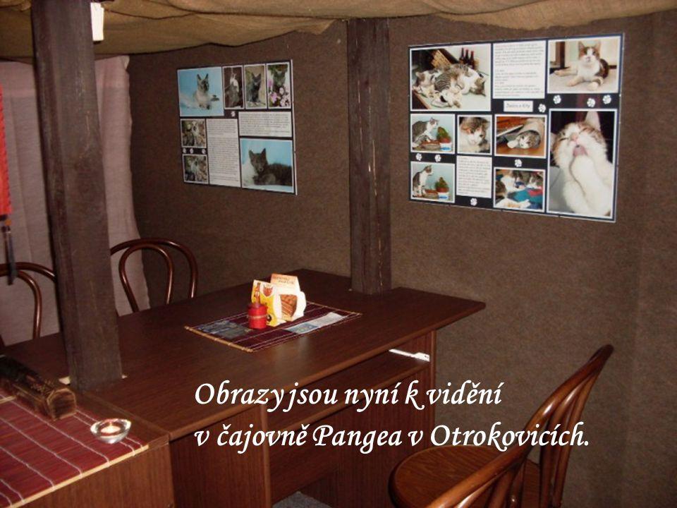 """V dubnu 2009 se ve Vizovicích konala výstava fotografií a příběhů """"našich koček."""