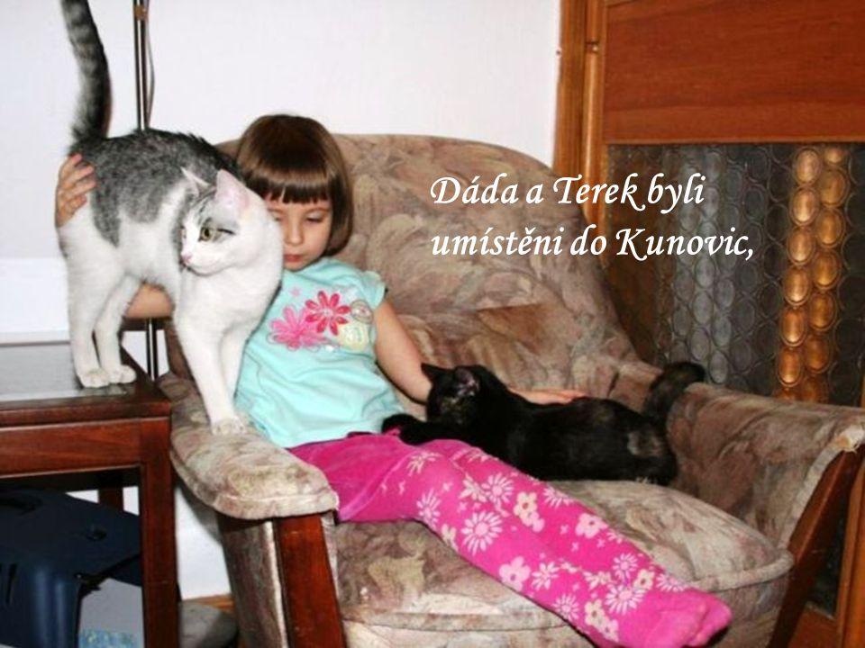 Pro dalších … koček si jejich noví majitelé přijeli k nám.