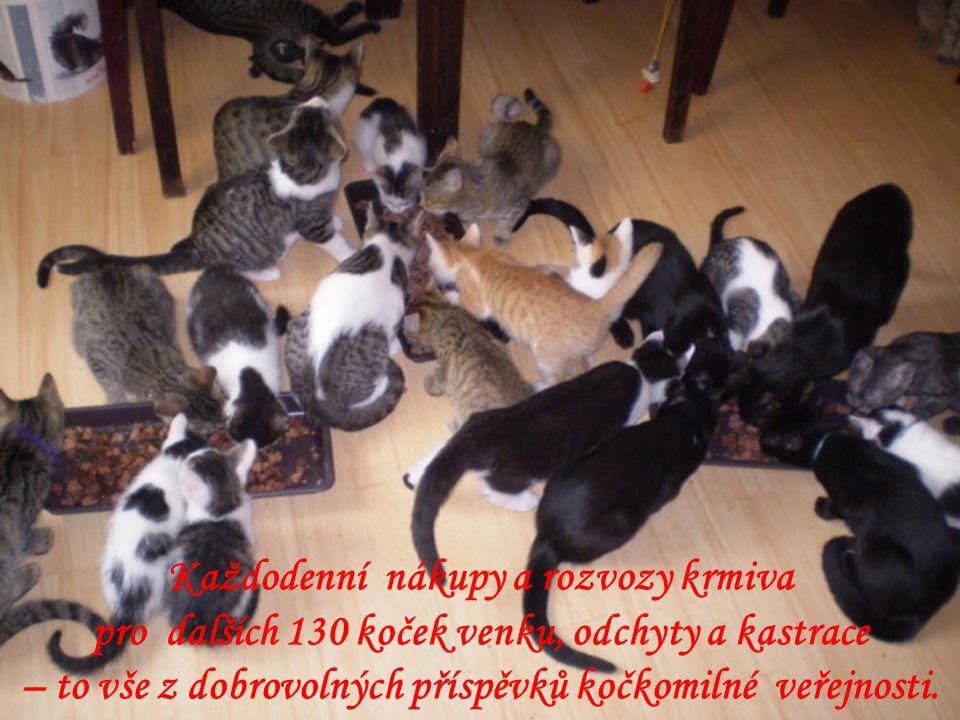 Jsme soukromé občanské sdružení pečující ve dvou soukromých bytech o 90 koček, pro něž jsme byly jedinou nadějí.
