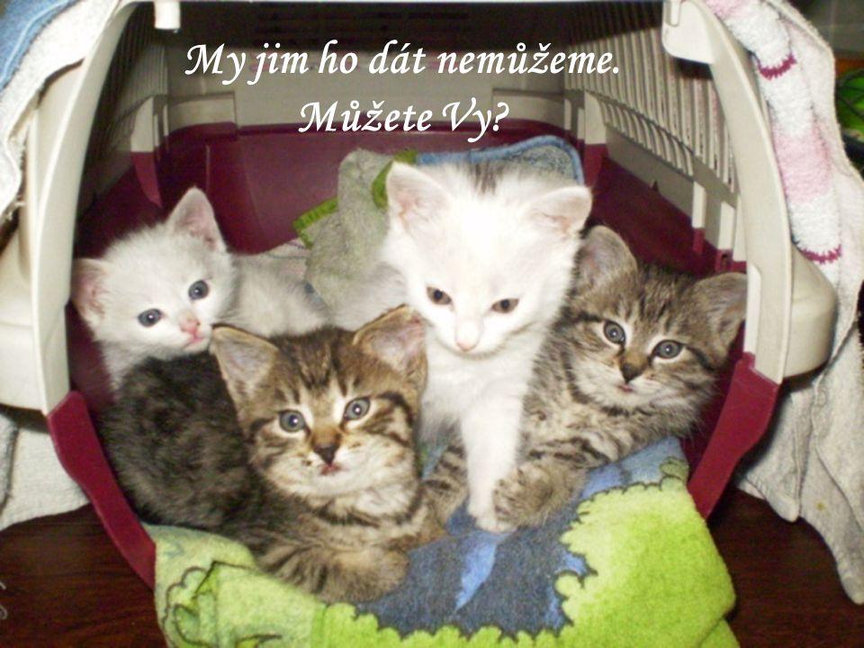 V roce 2009 jsme přijaly 166 a umístily 121 koček. Nyní u nás bydlí celkem 93 koček, které čekají na to nejcennější – nový domov.