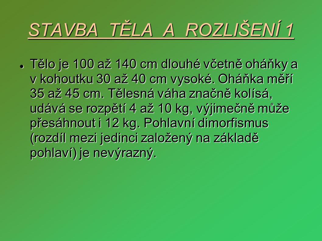 STAVBA TĚLA A ROZLIŠENÍ 1  Tělo je 100 až 140 cm dlouhé včetně oháňky a v kohoutku 30 až 40 cm vysoké. Oháňka měří 35 až 45 cm. Tělesná váha značně k