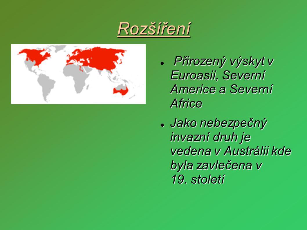 Rozšíření Přirozený výskyt v Euroasii, Severní Americe a Severní Africe  Přirozený výskyt v Euroasii, Severní Americe a Severní Africe  Jako nebezpe