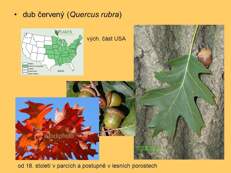 •dub červený (Quercus rubra) vých. část USA od 18. století v parcích a postupně v lesních porostech