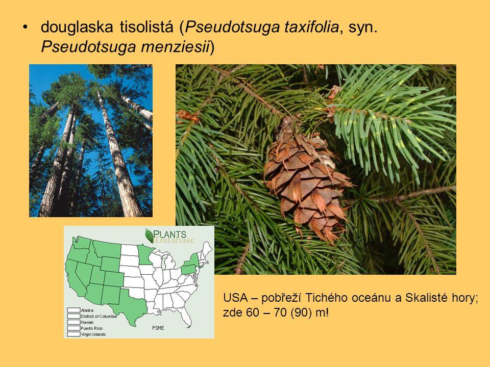 •douglaska tisolistá (Pseudotsuga taxifolia, syn.
