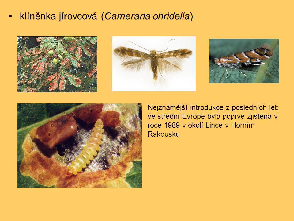 •klíněnka jírovcová (Cameraria ohridella) Nejznámější introdukce z posledních let; ve střední Evropě byla poprvé zjištěna v roce 1989 v okolí Lince v Horním Rakousku