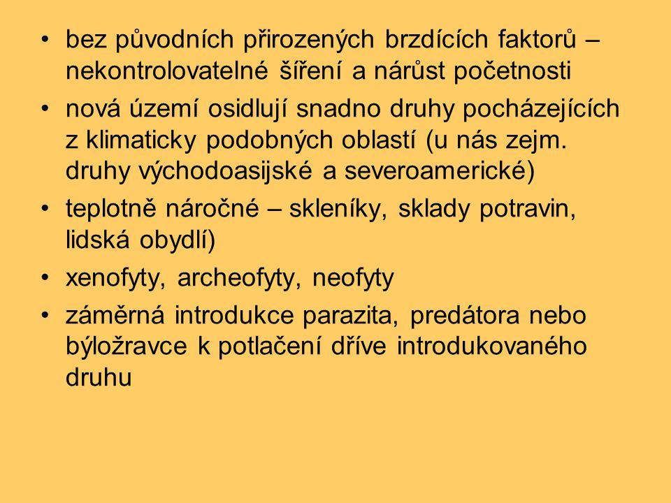 •rys ostrovid (Lynx lynx)