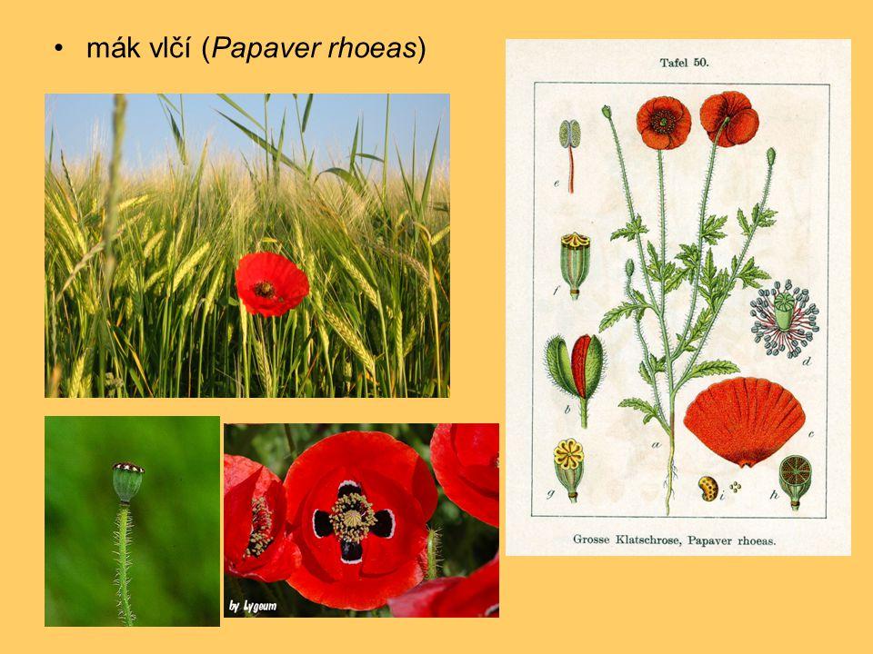 •jasoň červenooký (Parnassius apollo) V okolí Štramberku úspěšná repatriace; druh v ČR vymřelý kolem roku 1935