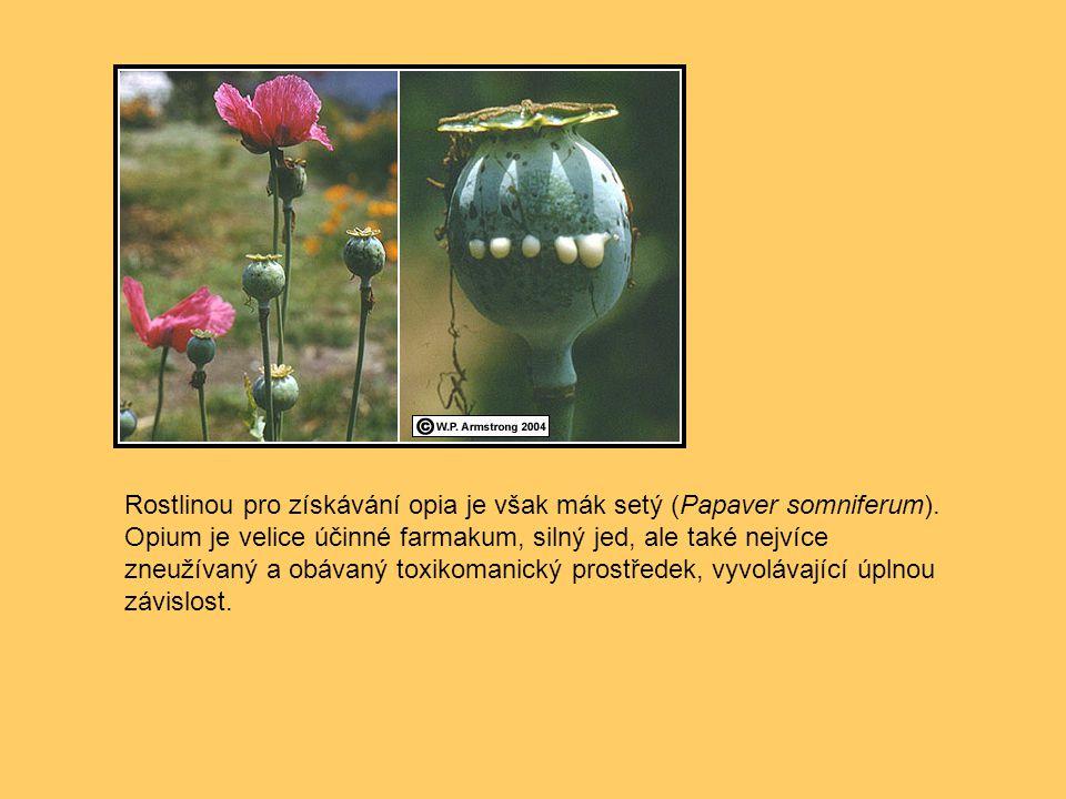 Rostlinou pro získávání opia je však mák setý (Papaver somniferum). Opium je velice účinné farmakum, silný jed, ale také nejvíce zneužívaný a obávaný