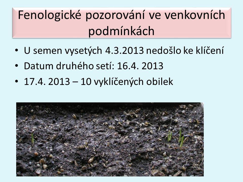Fenologické pozorování ve venkovních podmínkách • U semen vysetých 4.3.2013 nedošlo ke klíčení • Datum druhého setí: 16.4. 2013 • 17.4. 2013 – 10 vykl