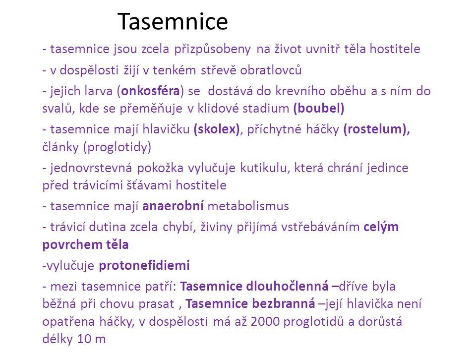 Tasemnice - tasemnice jsou zcela přizpůsobeny na život uvnitř těla hostitele - v dospělosti žijí v tenkém střevě obratlovců - jejich larva (onkosféra)
