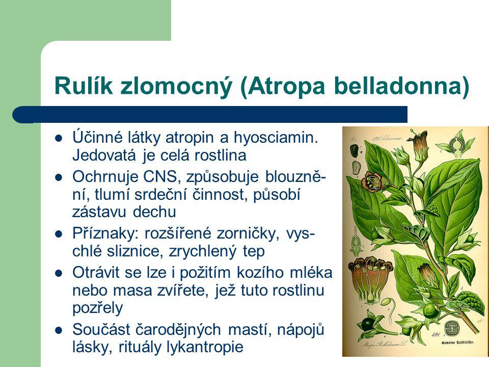 Rulík zlomocný (Atropa belladonna)  Účinné látky atropin a hyosciamin.