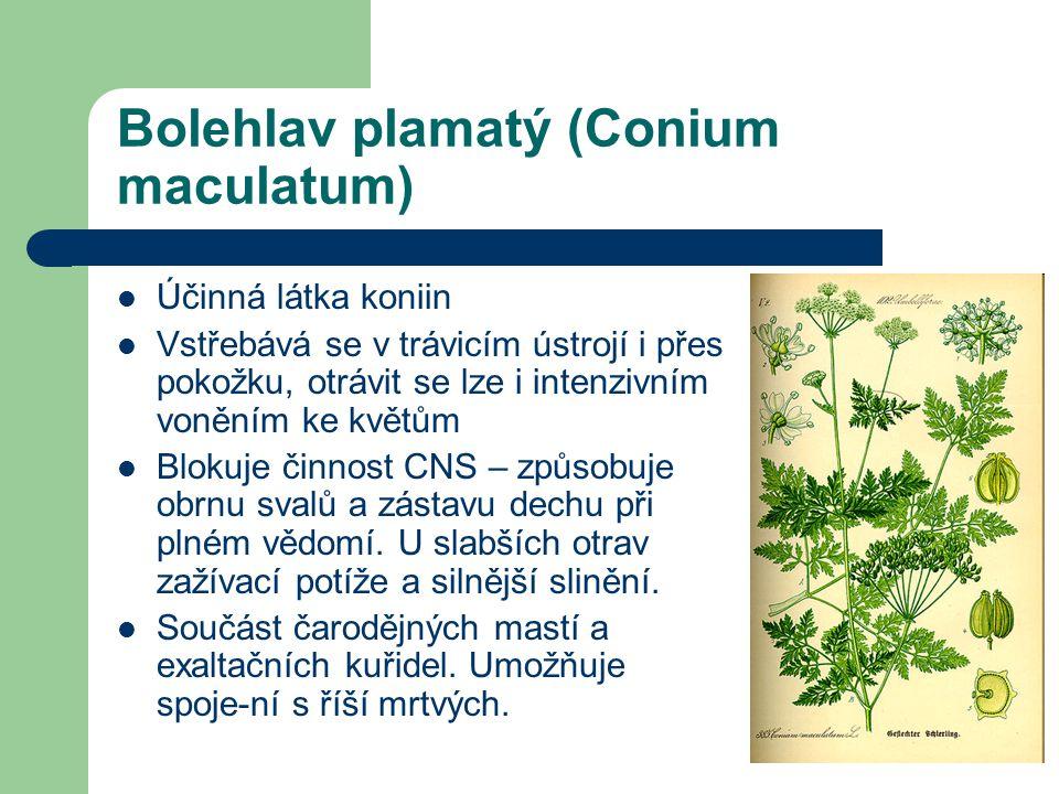 Bolehlav plamatý (Conium maculatum)  Účinná látka koniin  Vstřebává se v trávicím ústrojí i přes pokožku, otrávit se lze i intenzivním voněním ke květům  Blokuje činnost CNS – způsobuje obrnu svalů a zástavu dechu při plném vědomí.