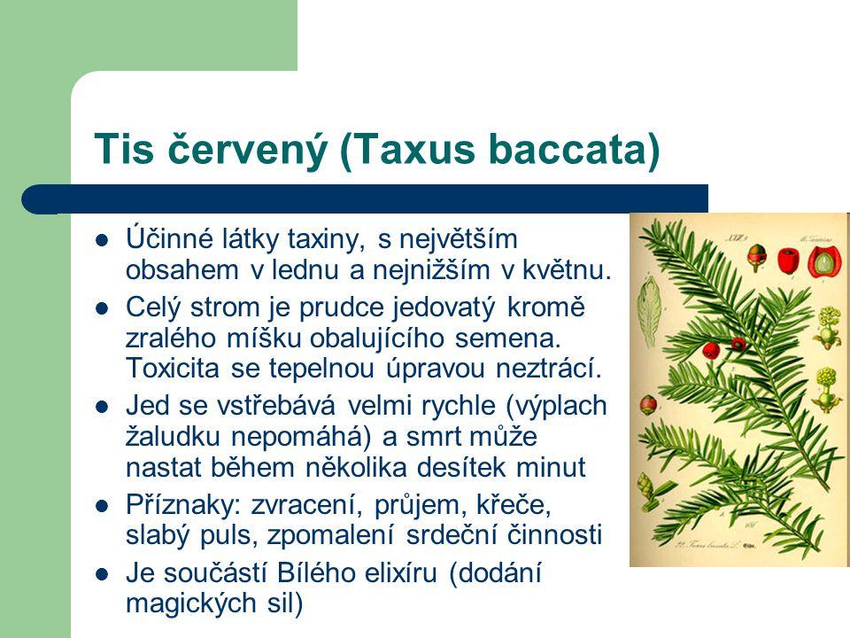 Tis červený (Taxus baccata)  Účinné látky taxiny, s největším obsahem v lednu a nejnižším v květnu.