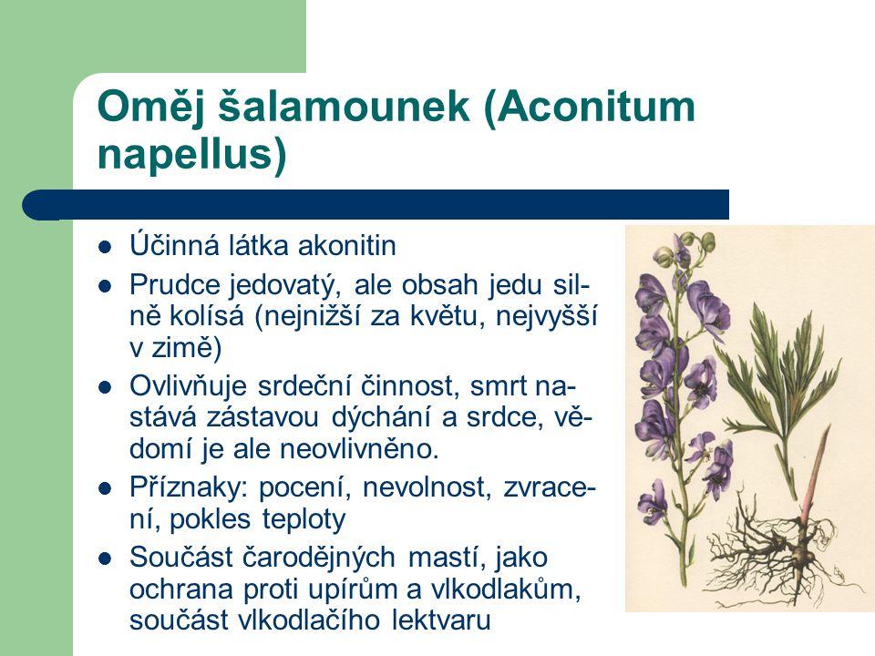 Oměj šalamounek (Aconitum napellus)  Účinná látka akonitin  Prudce jedovatý, ale obsah jedu sil- ně kolísá (nejnižší za květu, nejvyšší v zimě)  Ovlivňuje srdeční činnost, smrt na- stává zástavou dýchání a srdce, vě- domí je ale neovlivněno.