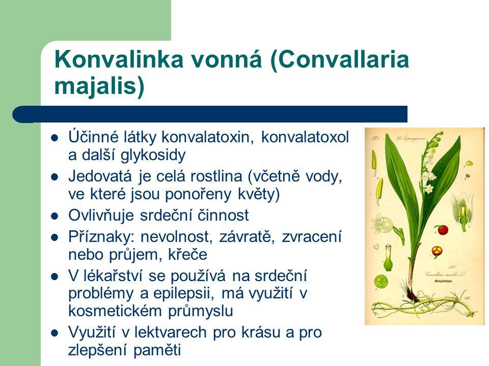 Konvalinka vonná (Convallaria majalis)  Účinné látky konvalatoxin, konvalatoxol a další glykosidy  Jedovatá je celá rostlina (včetně vody, ve které jsou ponořeny květy)  Ovlivňuje srdeční činnost  Příznaky: nevolnost, závratě, zvracení nebo průjem, křeče  V lékařství se používá na srdeční problémy a epilepsii, má využití v kosmetickém průmyslu  Využití v lektvarech pro krásu a pro zlepšení paměti