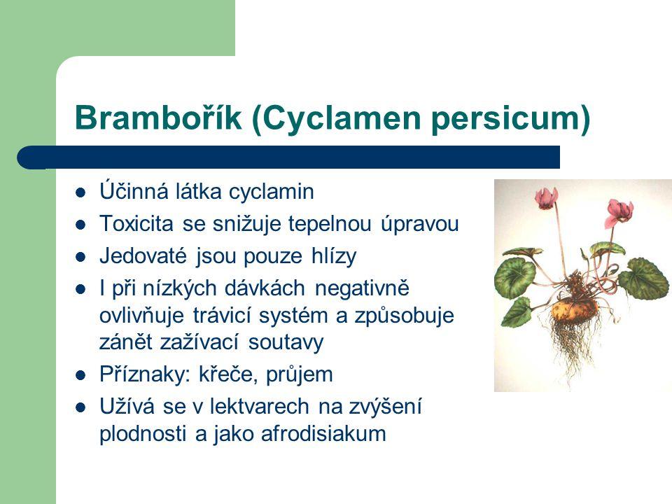 Brambořík (Cyclamen persicum)  Účinná látka cyclamin  Toxicita se snižuje tepelnou úpravou  Jedovaté jsou pouze hlízy  I při nízkých dávkách negativně ovlivňuje trávicí systém a způsobuje zánět zažívací soutavy  Příznaky: křeče, průjem  Užívá se v lektvarech na zvýšení plodnosti a jako afrodisiakum