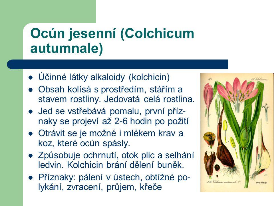 Ocún jesenní (Colchicum autumnale)  Účinné látky alkaloidy (kolchicin)  Obsah kolísá s prostředím, stářím a stavem rostliny.