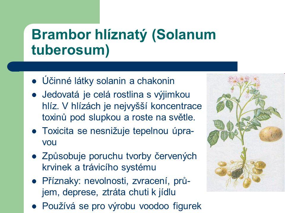 Brambor hlíznatý (Solanum tuberosum)  Účinné látky solanin a chakonin  Jedovatá je celá rostlina s výjimkou hlíz.