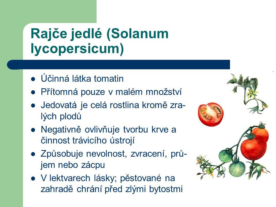 Rajče jedlé (Solanum lycopersicum)  Účinná látka tomatin  Přítomná pouze v malém množství  Jedovatá je celá rostlina kromě zra- lých plodů  Negativně ovlivňuje tvorbu krve a činnost trávicího ústrojí  Způsobuje nevolnost, zvracení, prů- jem nebo zácpu  V lektvarech lásky; pěstované na zahradě chrání před zlými bytostmi