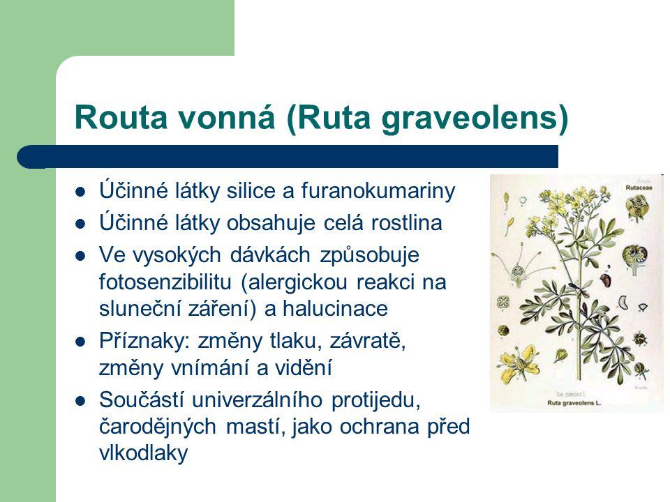 Routa vonná (Ruta graveolens)  Účinné látky silice a furanokumariny  Účinné látky obsahuje celá rostlina  Ve vysokých dávkách způsobuje fotosenzibilitu (alergickou reakci na sluneční záření) a halucinace  Příznaky: změny tlaku, závratě, změny vnímání a vidění  Součástí univerzálního protijedu, čarodějných mastí, jako ochrana před vlkodlaky