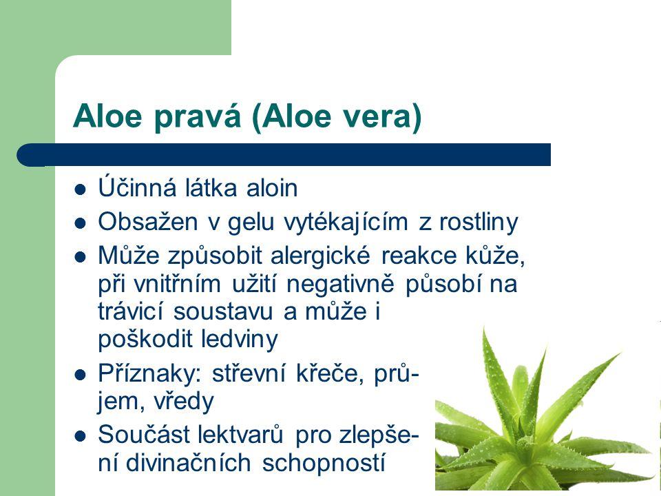 Aloe pravá (Aloe vera)  Účinná látka aloin  Obsažen v gelu vytékajícím z rostliny  Může způsobit alergické reakce kůže, při vnitřním užití negativně působí na trávicí soustavu a může i poškodit ledviny  Příznaky: střevní křeče, prů- jem, vředy  Součást lektvarů pro zlepše- ní divinačních schopností