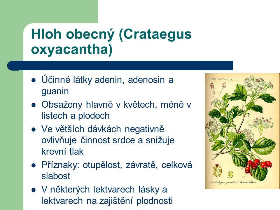 Hloh obecný (Crataegus oxyacantha)  Účinné látky adenin, adenosin a guanin  Obsaženy hlavně v květech, méně v listech a plodech  Ve větších dávkách negativně ovlivňuje činnost srdce a snižuje krevní tlak  Příznaky: otupělost, závratě, celková slabost  V některých lektvarech lásky a lektvarech na zajištění plodnosti