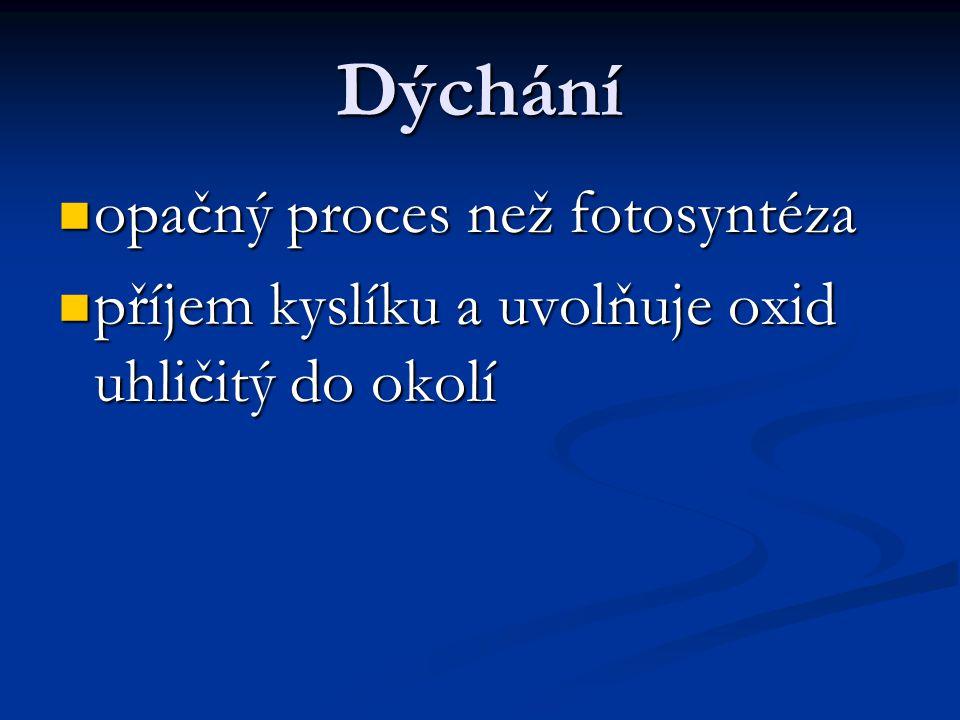 Dýchání  opačný proces než fotosyntéza  příjem kyslíku a uvolňuje oxid uhličitý do okolí