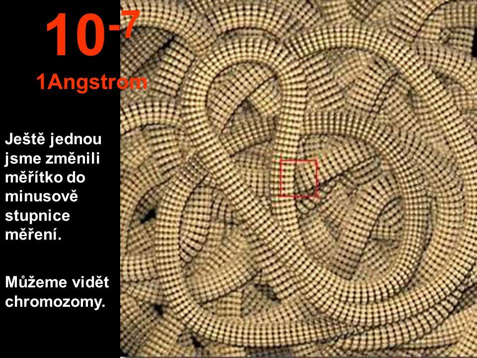 Je vidět jádro buńky. 10 -6 100 micronů