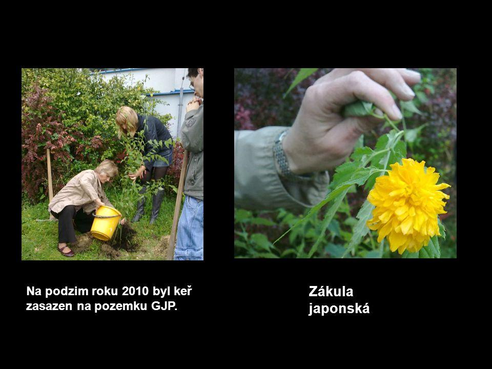 1.6.2011 Rodina Eisnerových Zdeněk Eisner pocházel z židovské rodiny.