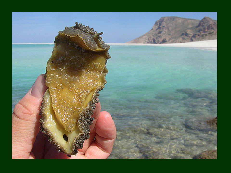 la diversidad marina es muy grande, y se caracteriza por la presencia de especies originarias de las regiones biológicas próximas, el Océano Índico occidental y el Mar Rojo.Océano ÍndicoMar Rojo