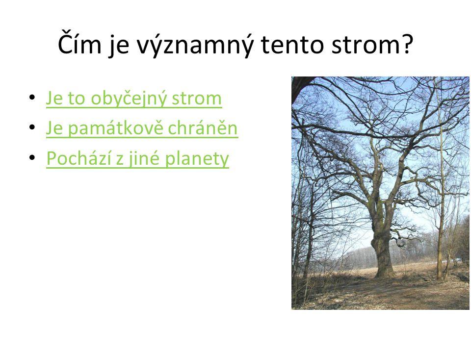 Čím je významný tento strom? • Je to obyčejný strom Je to obyčejný strom • Je památkově chráněn Je památkově chráněn • Pochází z jiné planety Pochází