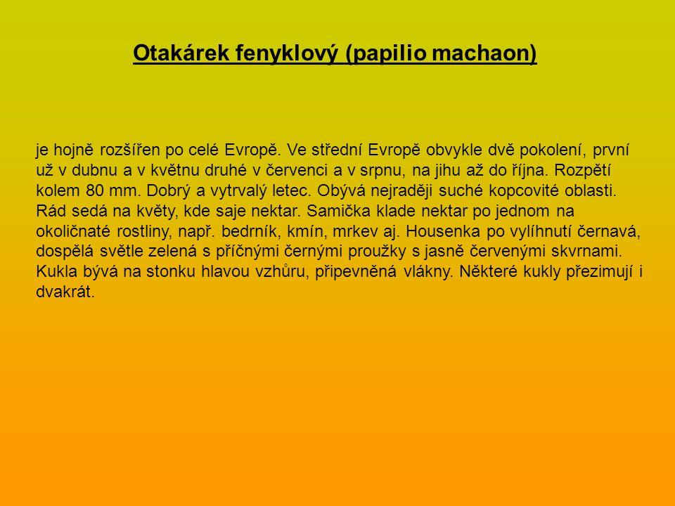 Otakárek fenyklový (papilio machaon) je hojně rozšířen po celé Evropě. Ve střední Evropě obvykle dvě pokolení, první už v dubnu a v květnu druhé v čer