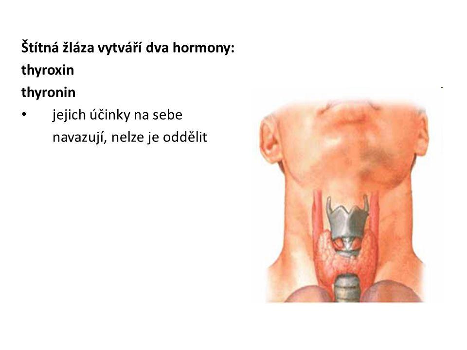 Štítná žláza vytváří dva hormony: thyroxin thyronin • jejich účinky na sebe navazují, nelze je oddělit