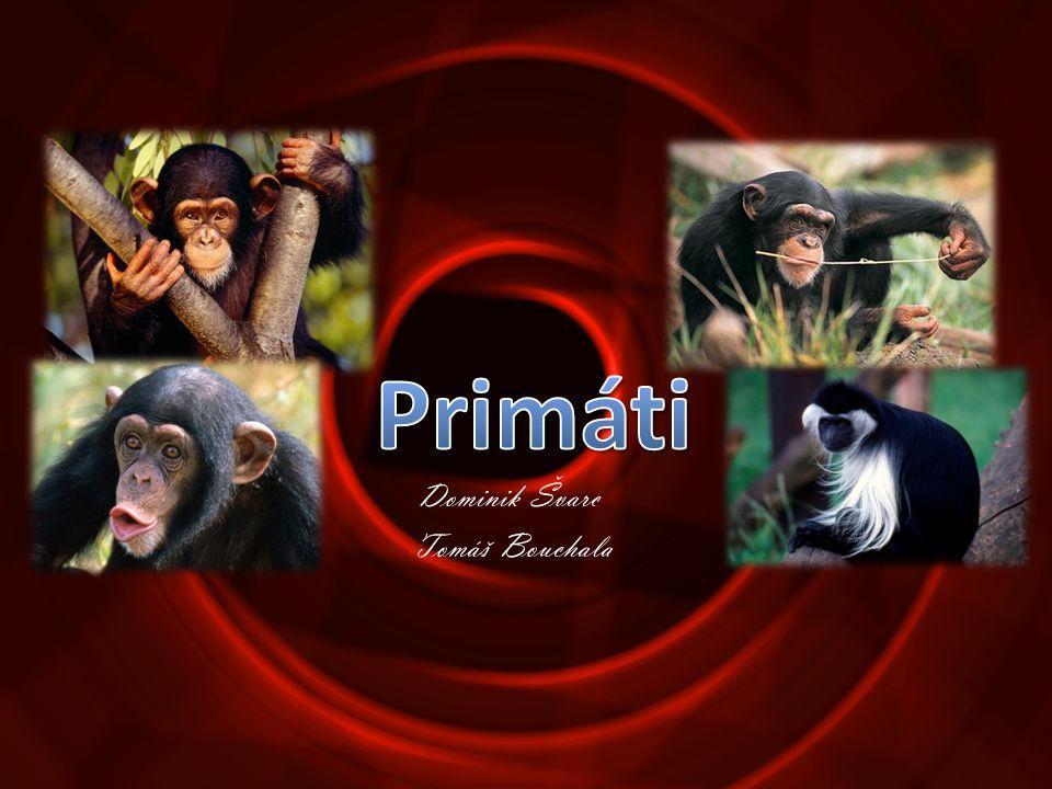 •Rod největších žijících primátů •Jsou převážně býložravé •Obývají lesy střední Afriky.