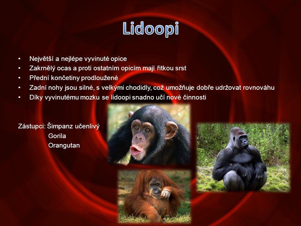 •Největší a nejlépe vyvinuté opice •Zakrnělý ocas a proti ostatním opicím mají řitkou srst •Přední končetiny prodloužené •Zadní nohy jsou silné, s vel
