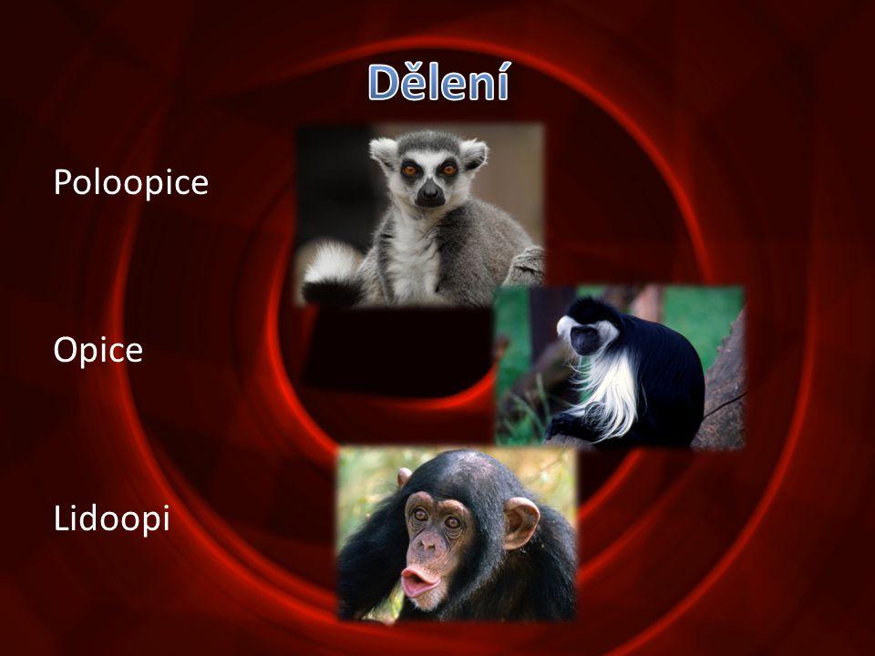 Poloopice Opice Lidoopi