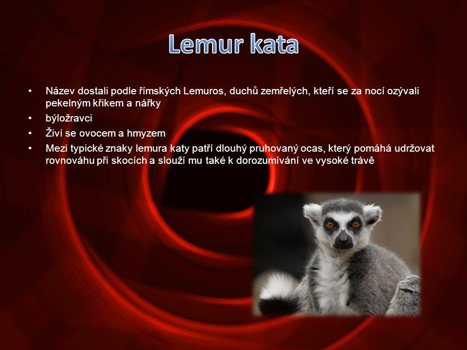 •Název dostali podle římských Lemuros, duchů zemřelých, kteří se za nocí ozývali pekelným křikem a nářky •býložravci •Živí se ovocem a hmyzem •Mezi ty