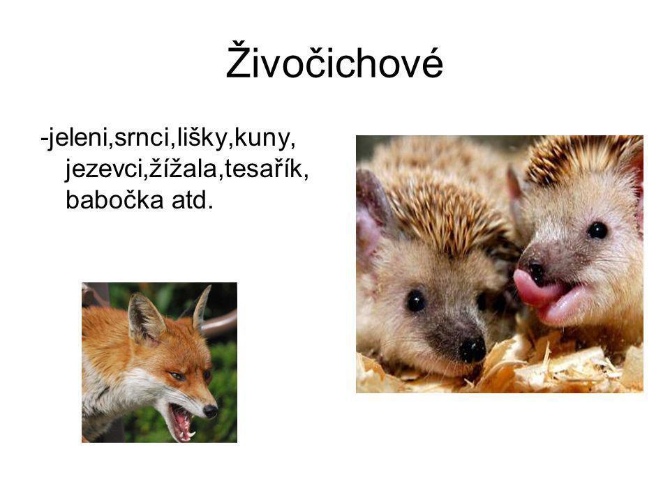 Živočichové -jeleni,srnci,lišky,kuny, jezevci,žížala,tesařík, babočka atd.