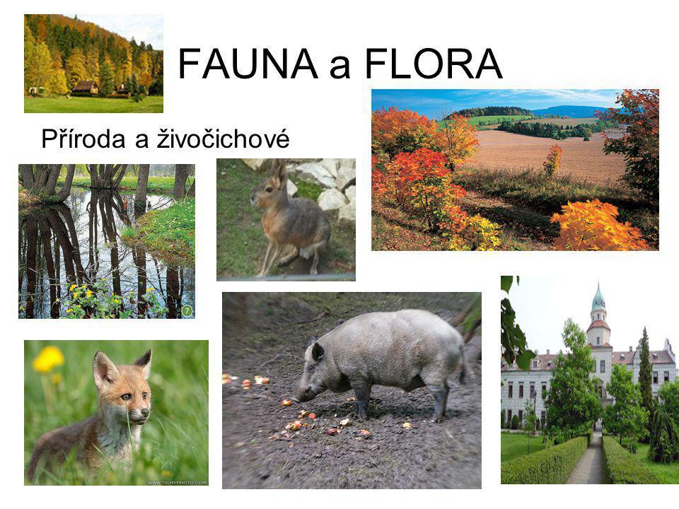 FAUNA a FLORA Příroda a živočichové